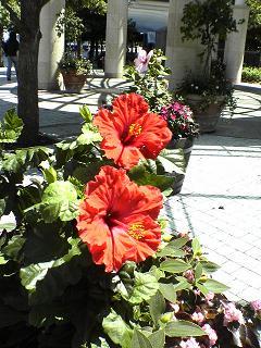flower200501